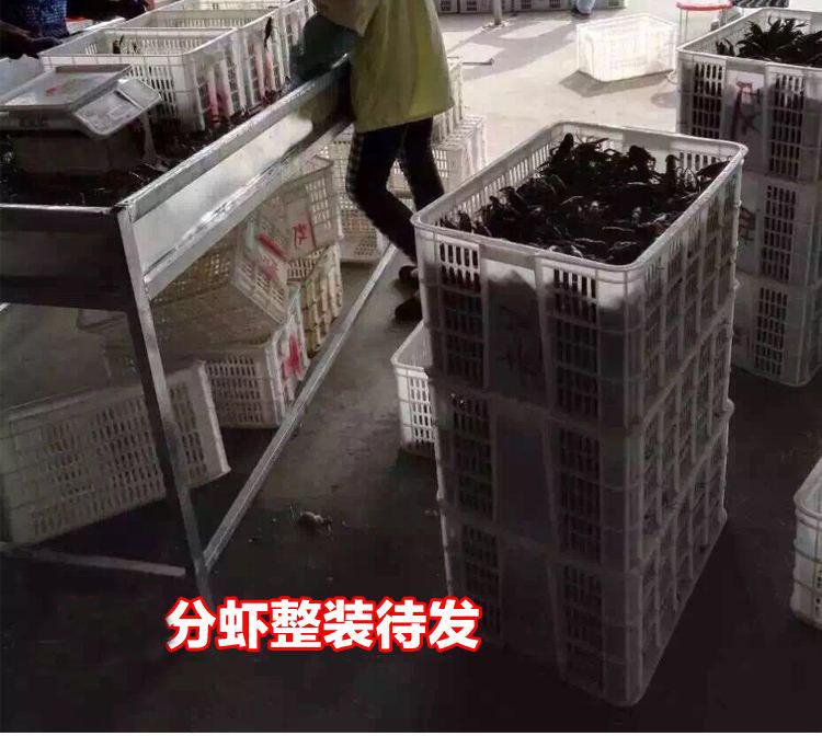湖南有品质的淡水小龙虾批发供应生产基地-广西小龙虾供应价格实惠