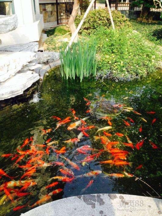 江蘇專業的花園魚池水過濾-崇明花園魚池過濾