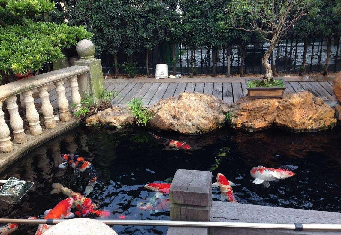 上海花園魚池過濾|找花園魚池水過濾就來常州鴻瀚環保工程