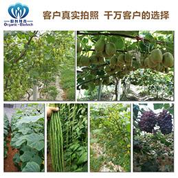 中国快捷的土壤调理剂|欧科拜克生物口碑好的土壤调理剂