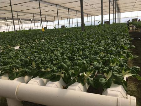 泉州蔬菜基地果蔬_泉州口碑好的蔬菜基地厂家