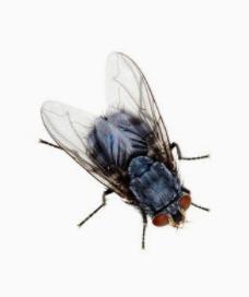 溧陽蟲控|哪里有提供實惠的溧陽滅鼠滅蟑