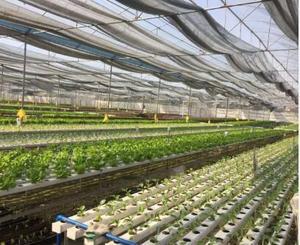 提供蔬菜配送-雙隆餐飲管理供應可靠的廣東蔬菜配送服務