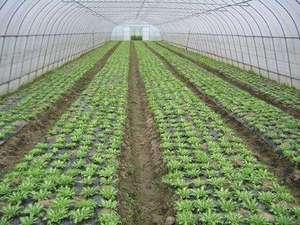 口碑好的蔬菜配送-有保障的广东蔬菜配送服务双隆餐饮管理提供