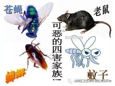 常州溧陽有害生物防治