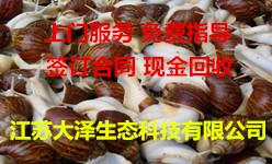 蜗牛养殖哪里有供应|养殖技术哪家好【江苏大泽科技】基地