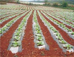 青海农用地膜厂家-好用的兰州地膜价格