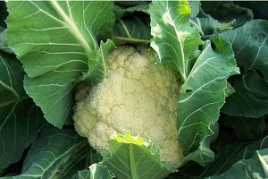 蔬菜配送服务-江苏可信赖的有机蔬菜配送公司