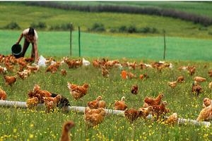 生鲜物料哪家好-苏州可靠的生鲜物料配送公司是哪家