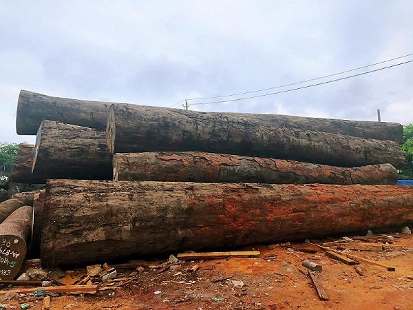进口木材-海口进口原木报价