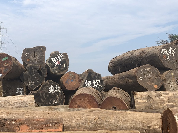 海口黄花梨原木|好的海南进口原木尽在海南黄家三雄