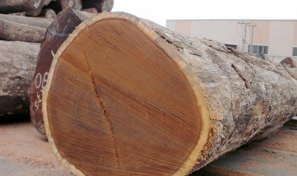 儋州菠蘿格防腐木批發價-供應海口口碑好的海南菠蘿格原木