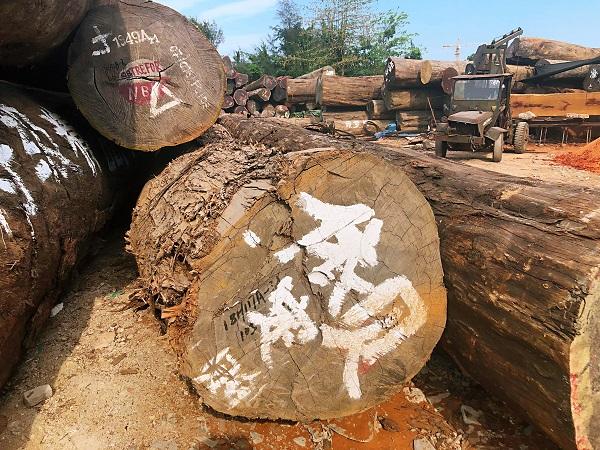 木材厂-规模大的海南木材厂就是海南黄家三雄