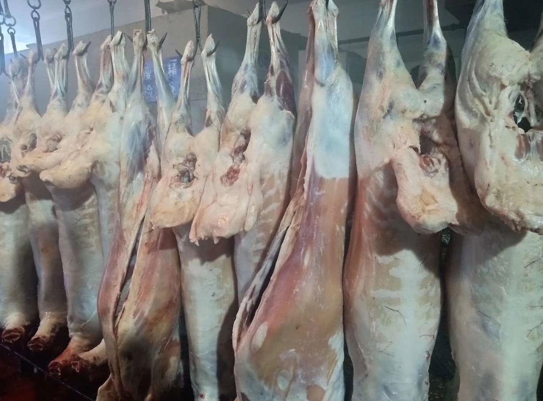 内蒙古羊下水-呼伦贝尔口碑好的牛羊肉供货厂家