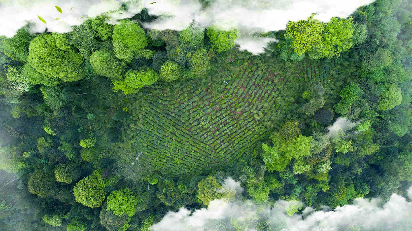 峨眉有機茶批發廠廠家批發-去哪找聲譽好的天然有機茶廠家