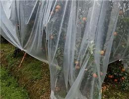 农膜厂家-怎么挑选好用的安阳农膜