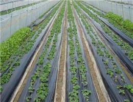 定西黑白地膜_品質好的安陽農膜供應商
