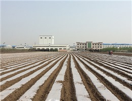武威降解地膜生产厂家-天水进宏塑化供应合格的安阳农膜