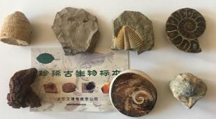 达尔文博物教学专业产供矿物标本,欢迎新老客户咨询
