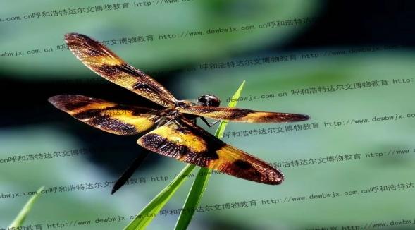 达尔文博物教学专业产供昆虫标本,欢迎新老客户咨询