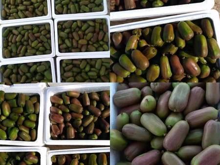进口软枣猕猴桃苗价格_辽宁优良红色软枣猕猴桃苗批发