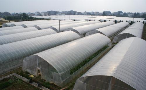 蔬菜大棚_超值的农业大棚推荐