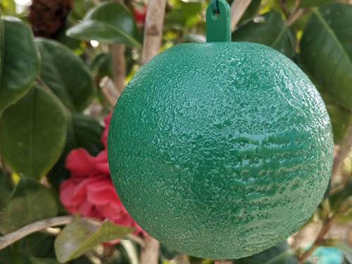 西安粘蟲球哪家好|廠家推薦銷量好的誘蠅球