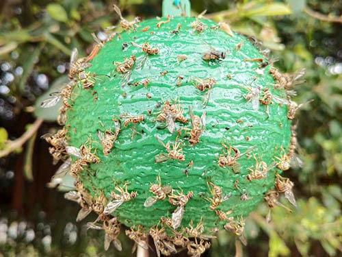 粘蝇板|质量好的诱蝇球西安益霸品质推荐