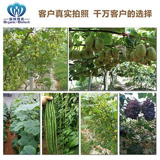 正规的草莓种植恶魔菌-哪里有供应价格合理的种植em菌种