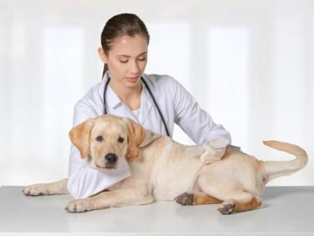 犬类血液寄生虫种类