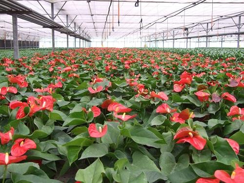 花卉温室大棚//花卉温室大棚建造