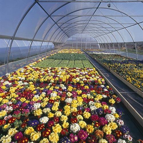 花卉温室大棚建设,花卉温室大棚承建,花卉温室大棚