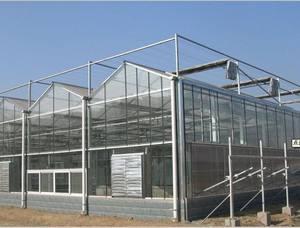 玻璃板温室//玻璃板温室建造