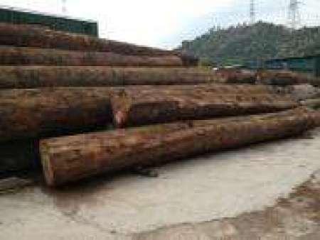 惠州杂木价格-进口杂木专业供货商