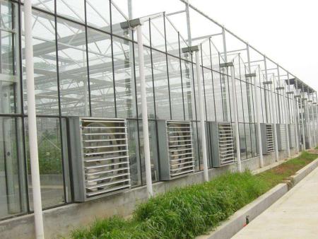 智能连栋温室大棚建造-口碑好的智能温室大棚哪里有