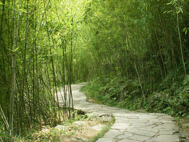 翠竹-翠竹种植