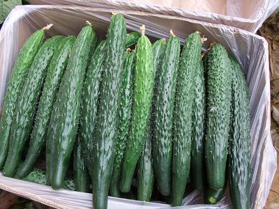 蔬菜配送策划|可信赖的食材配送服务上哪找