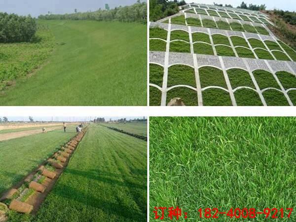 学校种什么草好-适合在学校种植的草坪种子价格