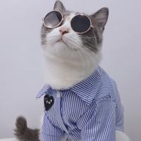 英国短毛猫 缅因猫 折耳猫 无毛猫 加菲猫宠物医院有哪些-可靠的英国短毛猫-别错过上海乂彦宠物用品