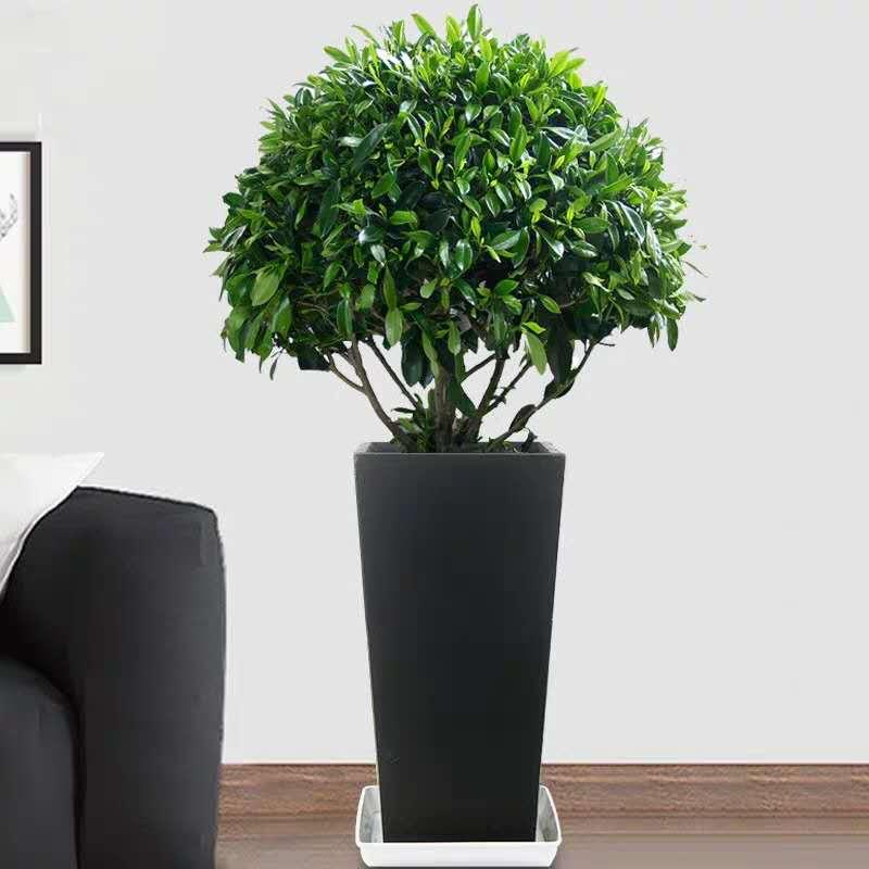 市南花卉租賃價格-要找專業的花卉租賃就選卓進源花卉