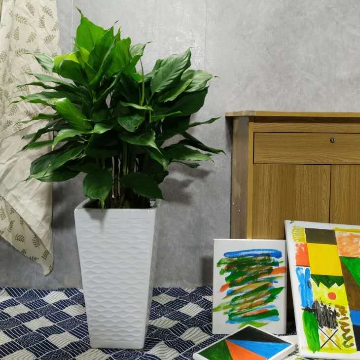 青島花卉租賃資訊|城陽花卉租賃費用