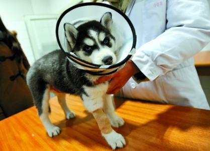 宠物之家宠物医院做值得信赖的宠物手术