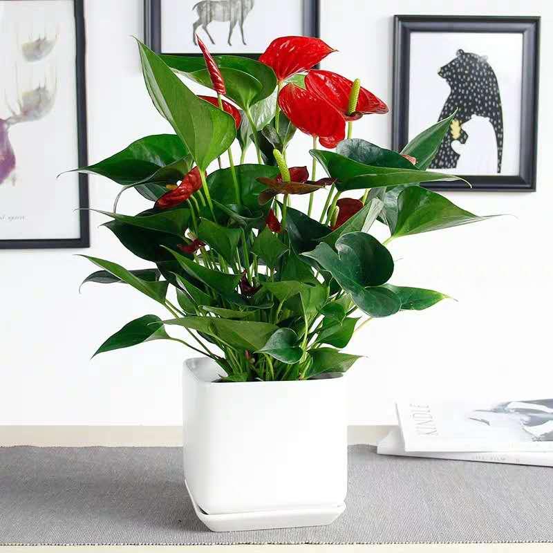 優良的綠植盆栽當選卓進源花卉-李滄綠植種類有哪些