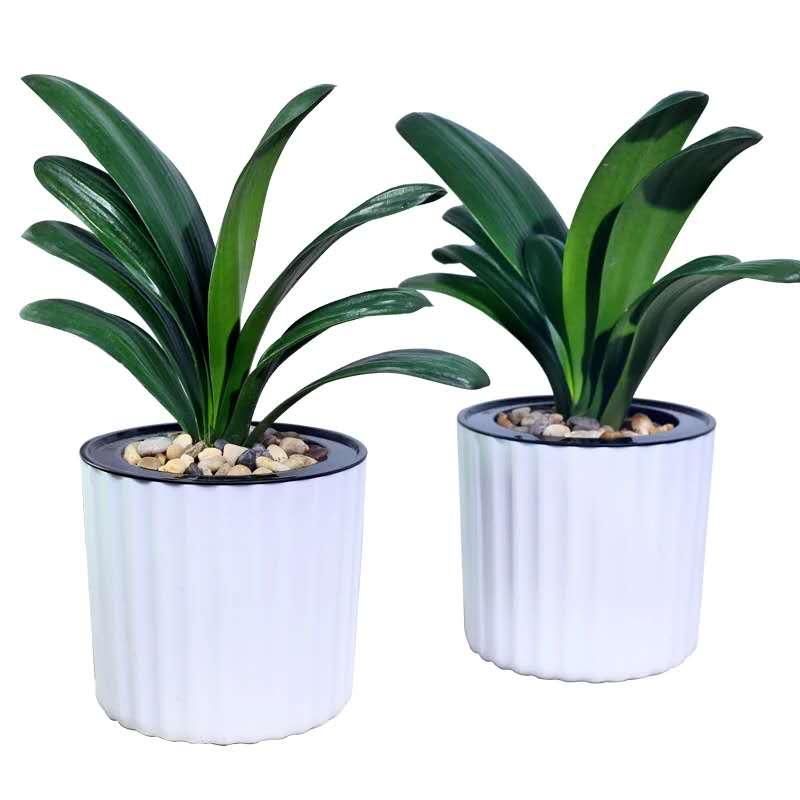 青島專業的綠植盆栽_即墨綠植樣式