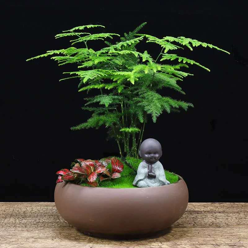 青島專業的綠植盆栽-膠州綠植