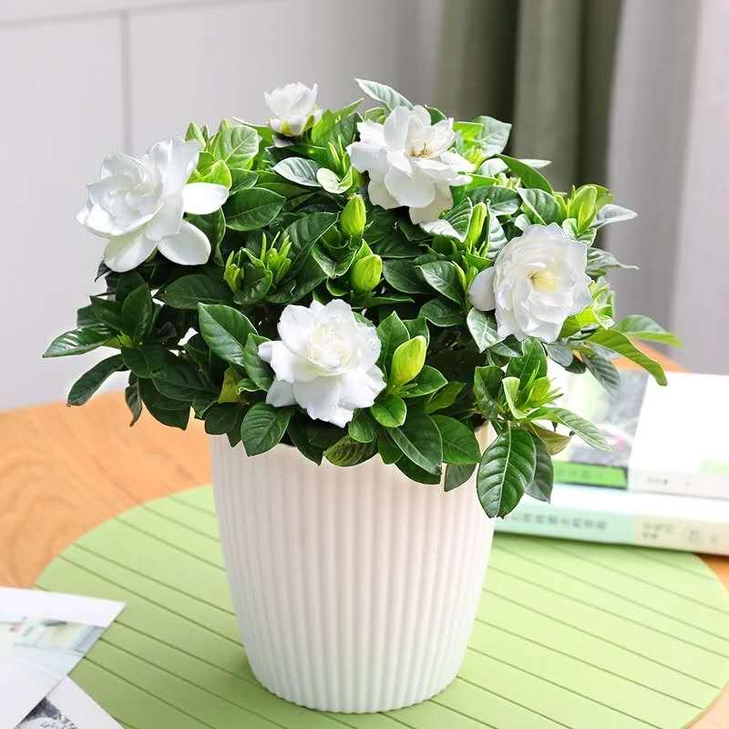 青島專業的綠植盆栽推薦-平度綠植養殖方法