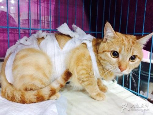 凌源市宠物之家宠物医院专业猫病治疗