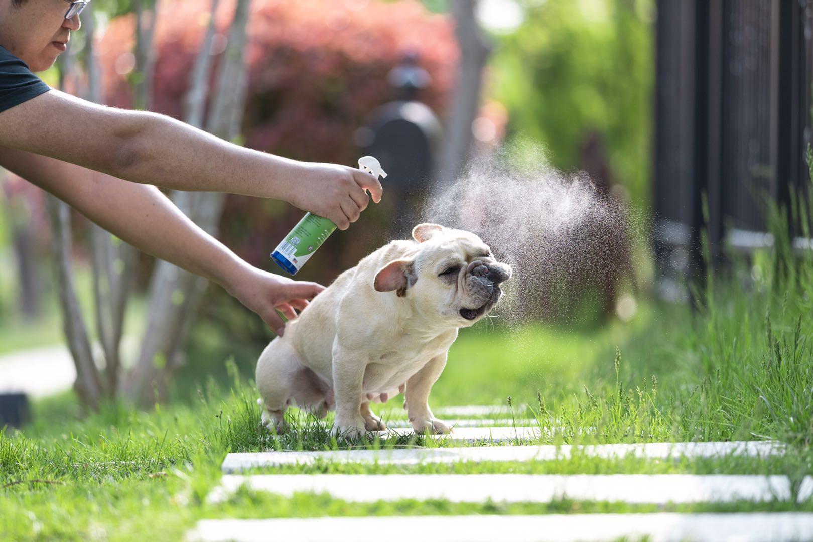 【寵昵寵物】多庫酯鈉潤滑去污 皺葉酸模提取物 保護耳壁
