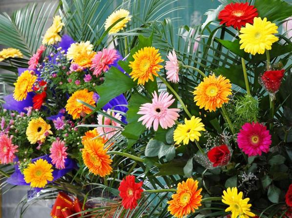 天津非洲菊-雅润花卉苗木供应优良的非洲菊