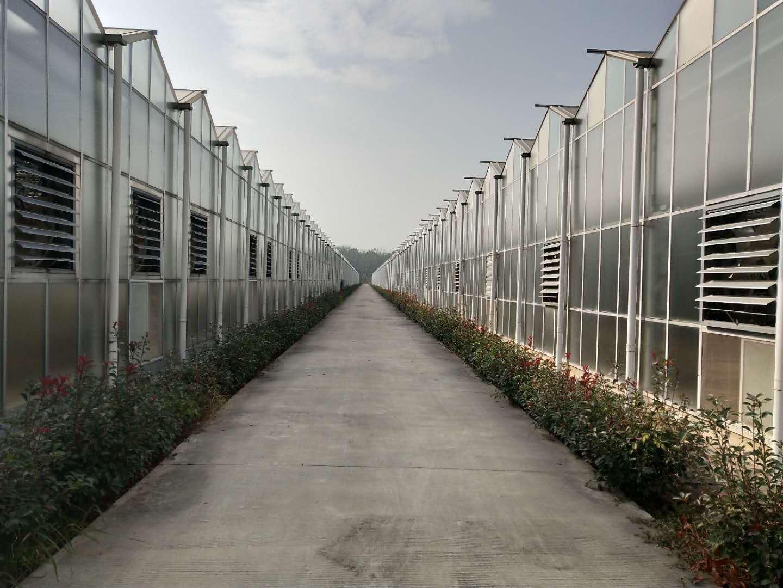阳光板温室——阳光板温室造价【推荐一下吧!】